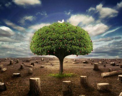 Retiro Ecologia e Espiritualidade. Dia 23